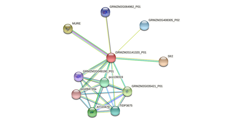 GRMZM2G141320_P01 protein (Zea mays) - STRING interaction network