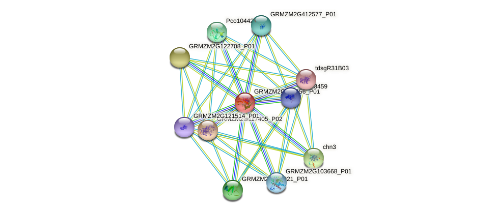 GRMZM2G141456_P01 protein (Zea mays) - STRING interaction network