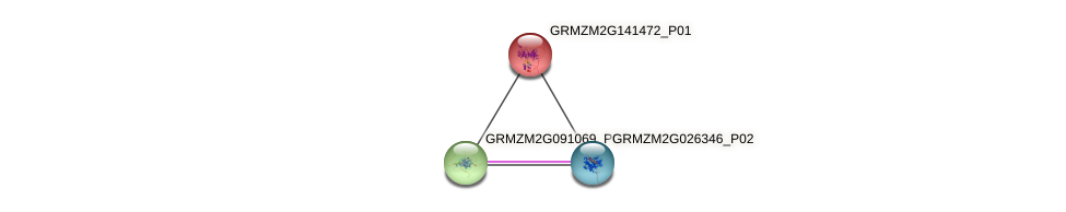 GRMZM2G141472_P01 protein (Zea mays) - STRING interaction network