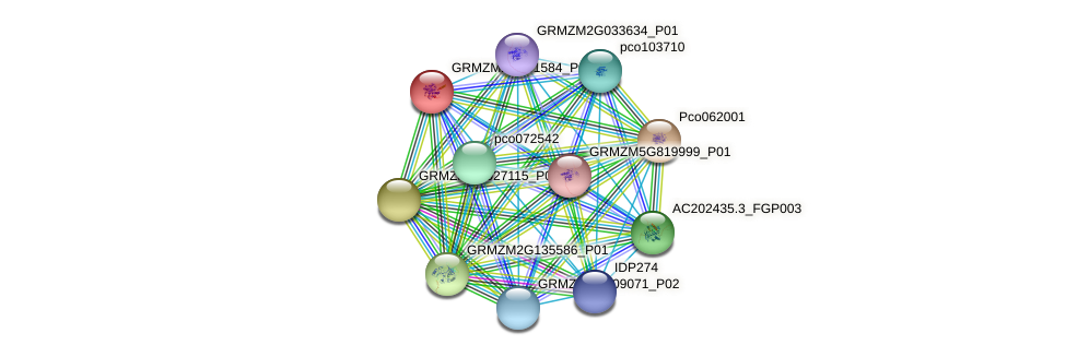 GRMZM2G141584_P01 protein (Zea mays) - STRING interaction network