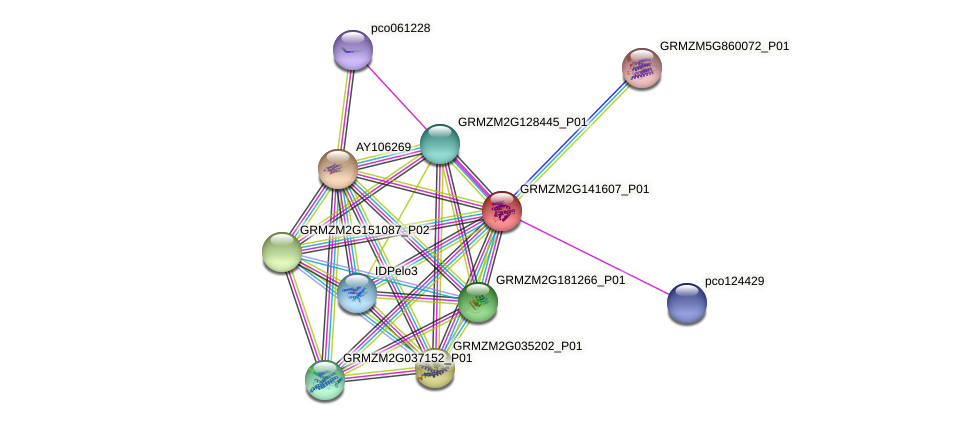 GRMZM2G141607_P01 protein (Zea mays) - STRING interaction network