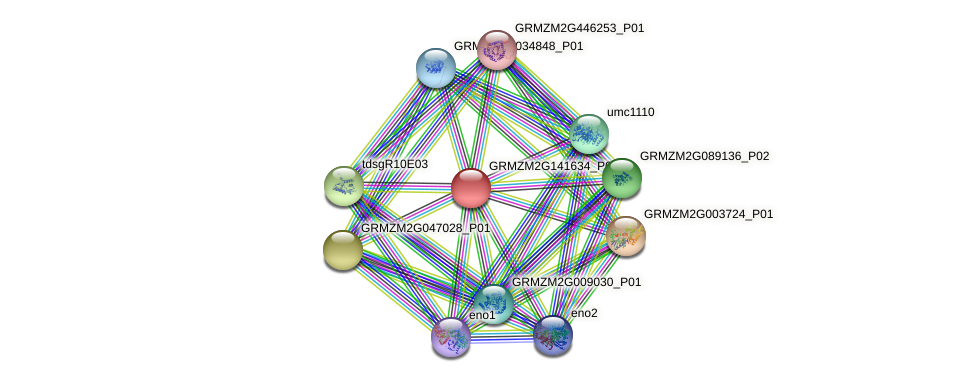 GRMZM2G141634_P02 protein (Zea mays) - STRING interaction network