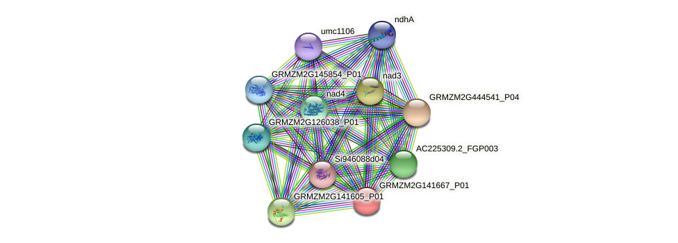 GRMZM2G141667_P01 protein (Zea mays) - STRING interaction network