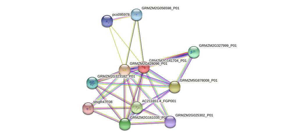 Zm.83205 protein (Zea mays) - STRING interaction network