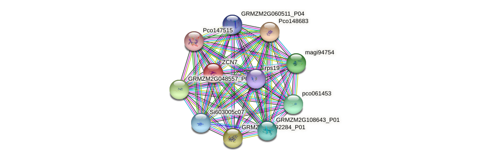 ZCN7 protein (Zea mays) - STRING interaction network