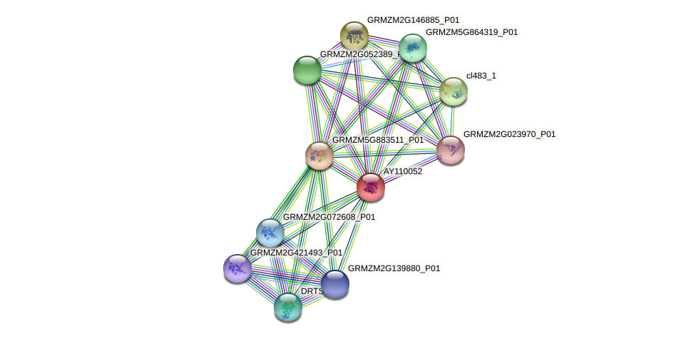 AY110052 protein (Zea mays) - STRING interaction network