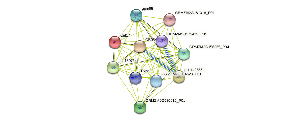 Cel17 protein (Zea mays) - STRING interaction network