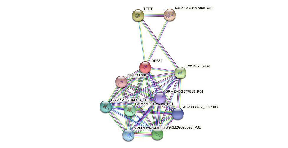IDP689 protein (Zea mays) - STRING interaction network