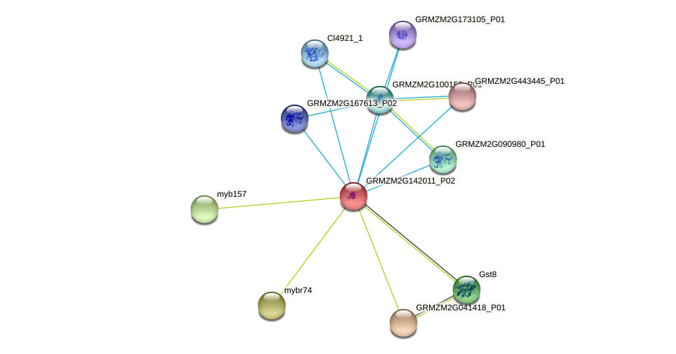 GRMZM2G142011_P02 protein (Zea mays) - STRING interaction network