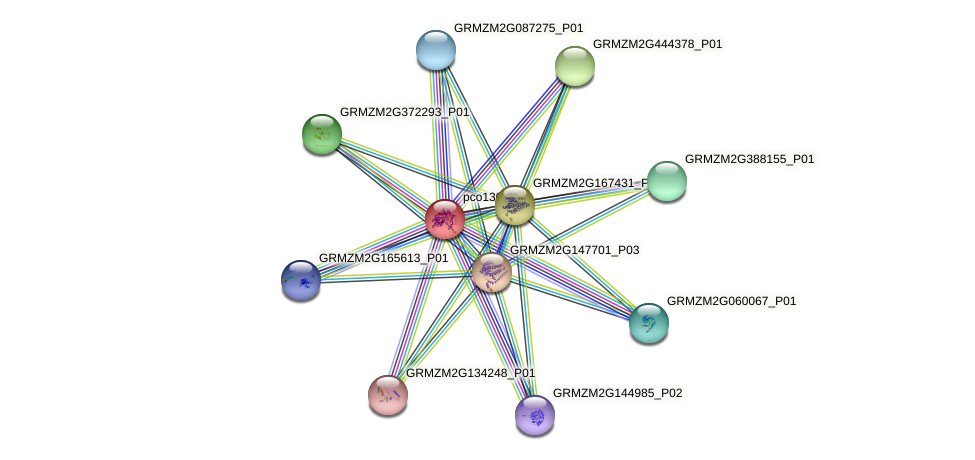pco130312 protein (Zea mays) - STRING interaction network