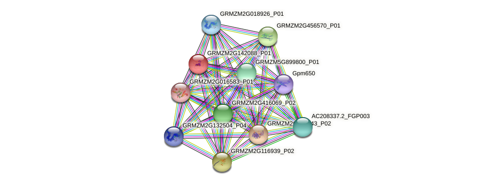 GRMZM2G142088_P01 protein (Zea mays) - STRING interaction network