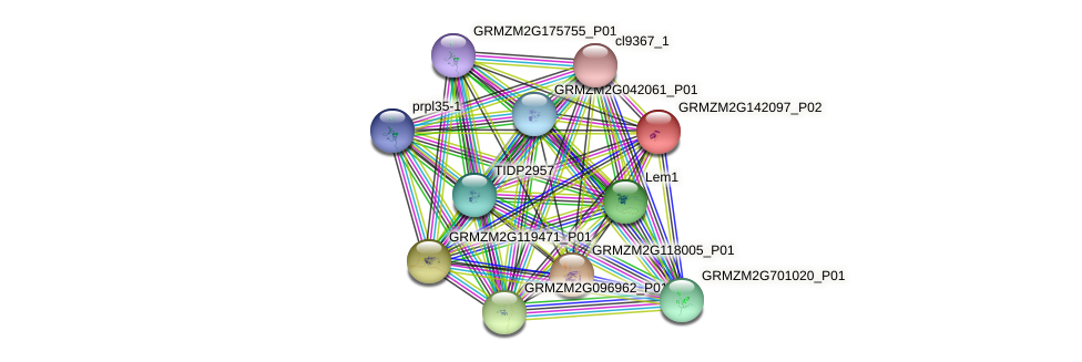 GRMZM2G142097_P02 protein (Zea mays) - STRING interaction network