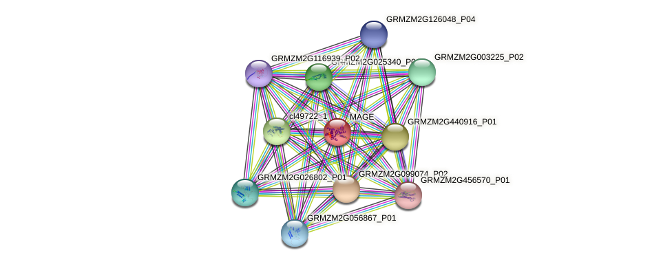 MAGE protein (Zea mays) - STRING interaction network