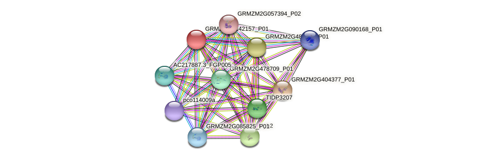 GRMZM2G142157_P01 protein (Zea mays) - STRING interaction network