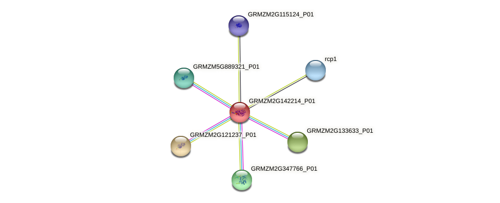 GRMZM2G142214_P01 protein (Zea mays) - STRING interaction network