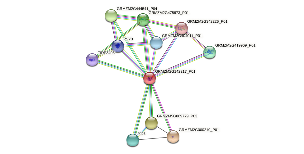 GRMZM2G142217_P01 protein (Zea mays) - STRING interaction network