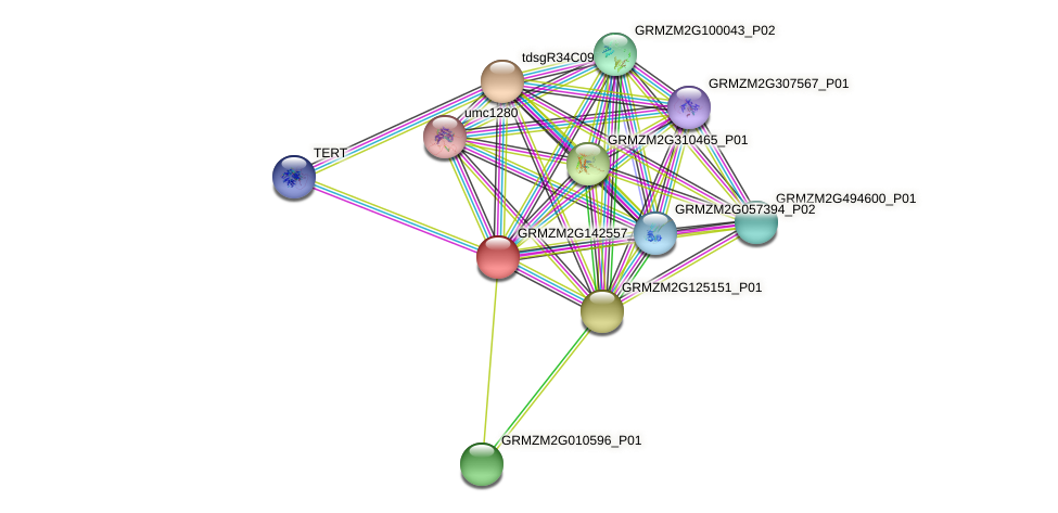Zm.7649 protein (Zea mays) - STRING interaction network