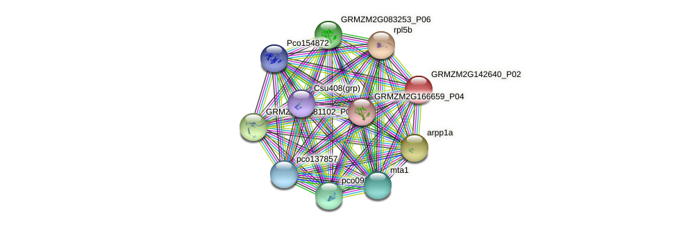 GRMZM2G142640_P01 protein (Zea mays) - STRING interaction network