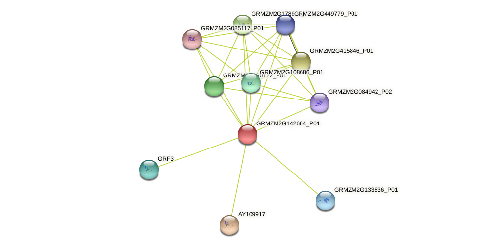GRMZM2G142664_P01 protein (Zea mays) - STRING interaction network