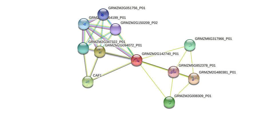 GRMZM2G142740_P01 protein (Zea mays) - STRING interaction network