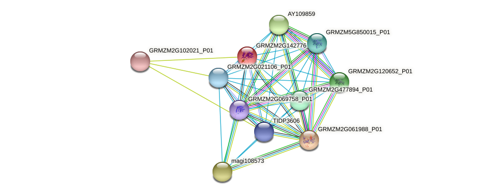 GRMZM2G142776_P01 protein (Zea mays) - STRING interaction network