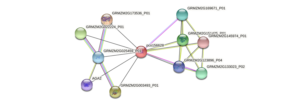 pco156628 protein (Zea mays) - STRING interaction network