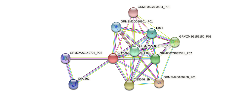 GRMZM2G142825_P01 protein (Zea mays) - STRING interaction network