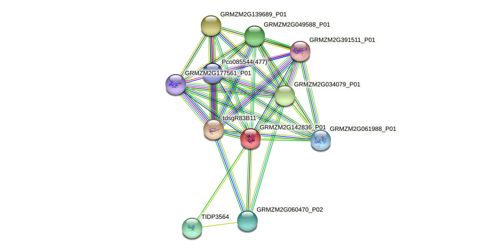 Zm.25077 protein (Zea mays) - STRING interaction network