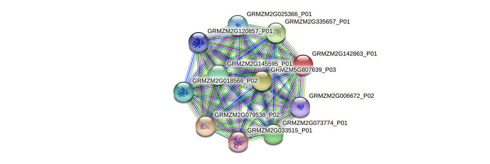 GRMZM2G142863_P01 protein (Zea mays) - STRING interaction network