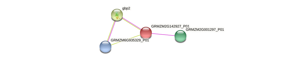 GRMZM2G142927_P01 protein (Zea mays) - STRING interaction network