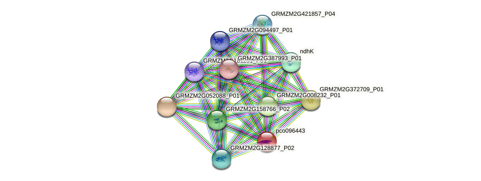 GRMZM2G143128_P01 protein (Zea mays) - STRING interaction network