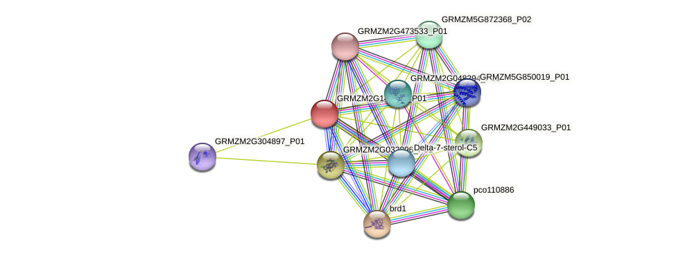 GRMZM2G143235_P01 protein (Zea mays) - STRING interaction network