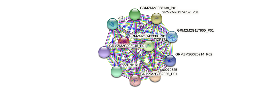 GRMZM2G143330_P01 protein (Zea mays) - STRING interaction network