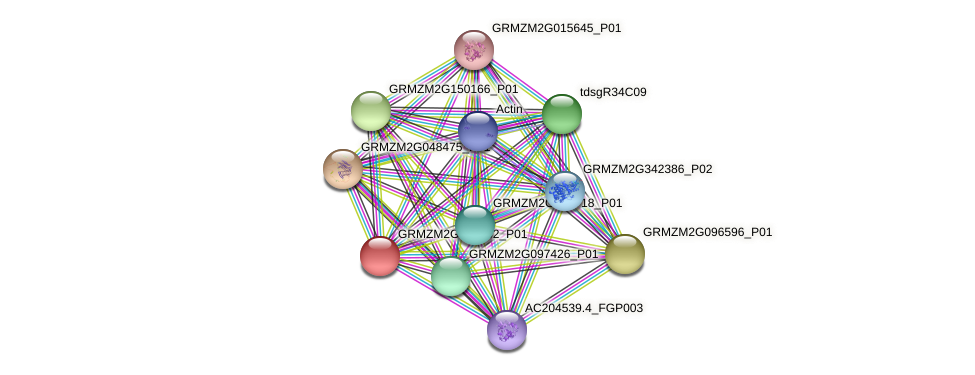 GRMZM2G143332_P01 protein (Zea mays) - STRING interaction network