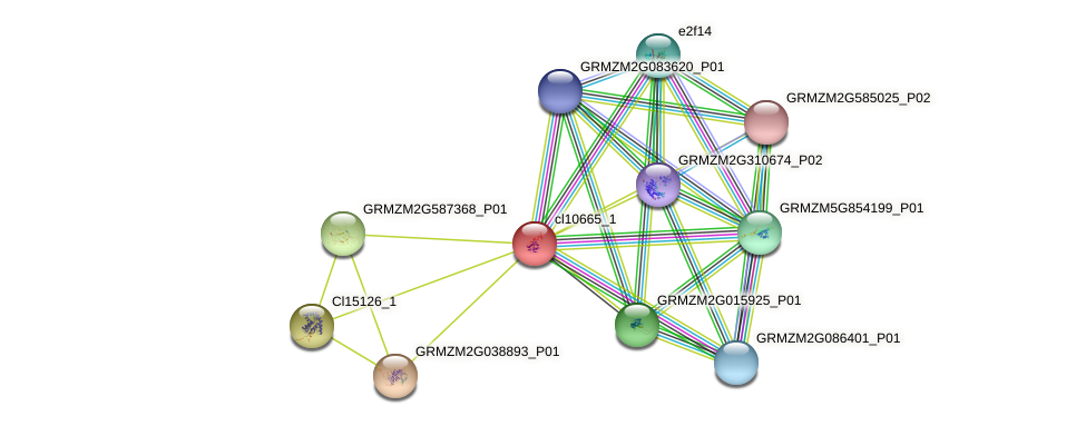 cl10665_1 protein (Zea mays) - STRING interaction network