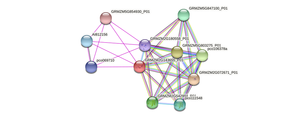GRMZM2G143655_P01 protein (Zea mays) - STRING interaction network