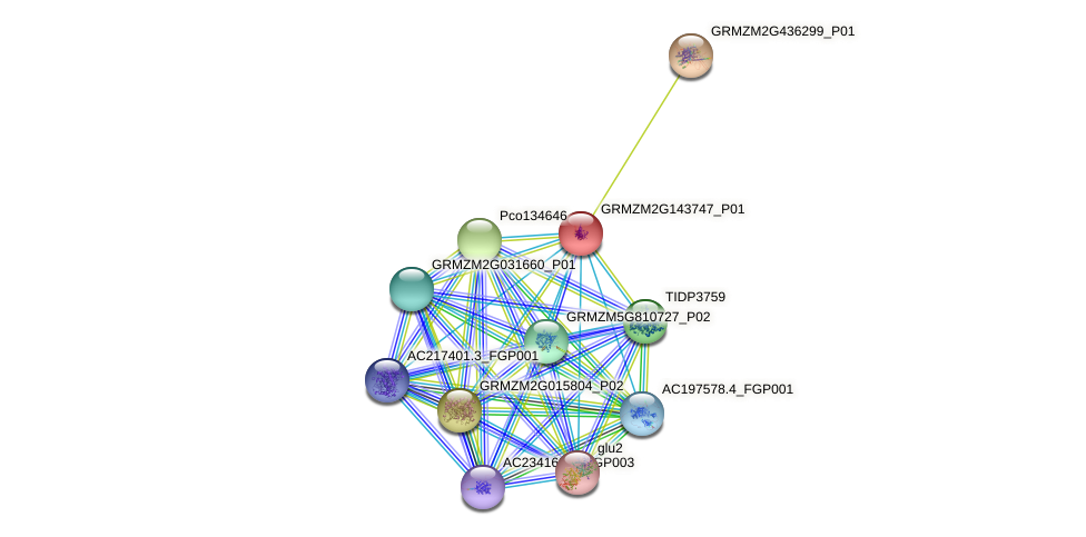 100381926 protein (Zea mays) - STRING interaction network