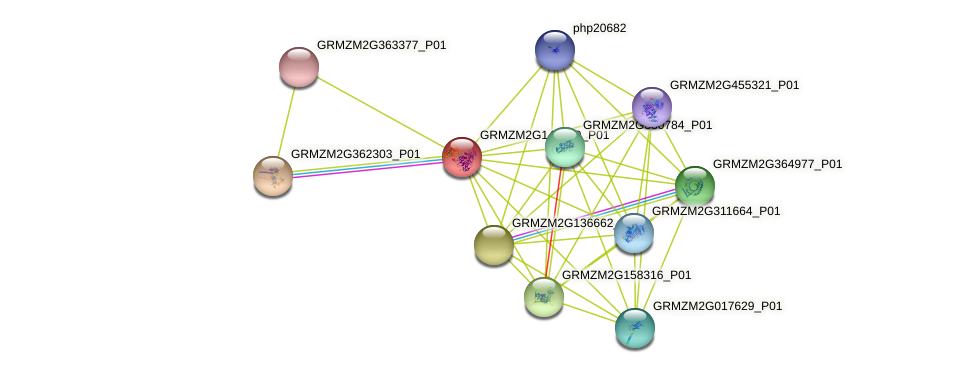 GRMZM2G143769_P01 protein (Zea mays) - STRING interaction network
