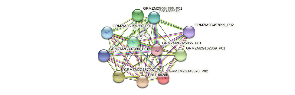 GRMZM2G143870_P02 protein (Zea mays) - STRING interaction network