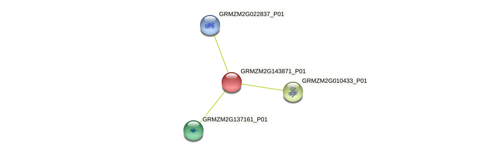 GRMZM2G143871_P01 protein (Zea mays) - STRING interaction network