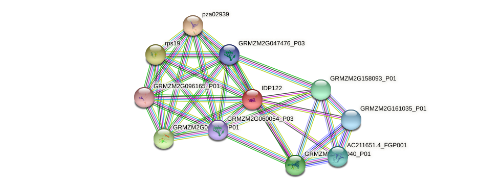 IDP122 protein (Zea mays) - STRING interaction network