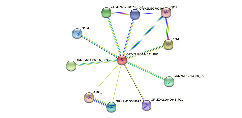 GRMZM2G144021_P01 protein (Zea mays) - STRING interaction network