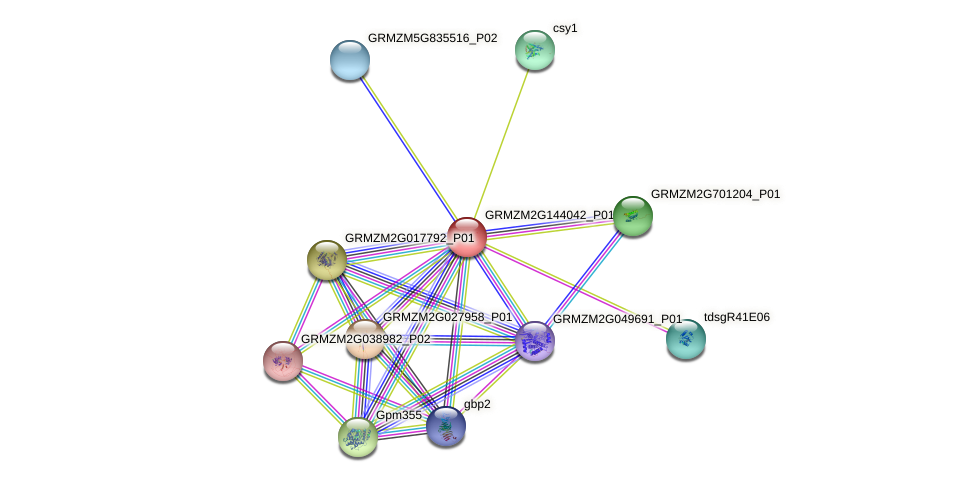GRMZM2G144042_P01 protein (Zea mays) - STRING interaction network