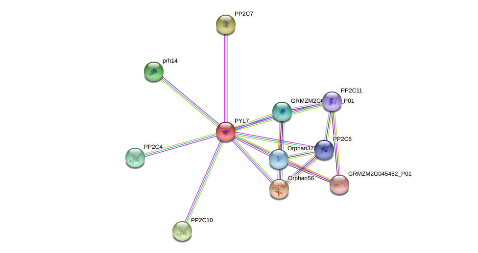 PYL7 protein (Zea mays) - STRING interaction network