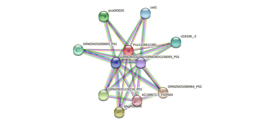 100284622 protein (Zea mays) - STRING interaction network