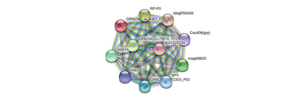 GRMZM2G144387_P01 protein (Zea mays) - STRING interaction network