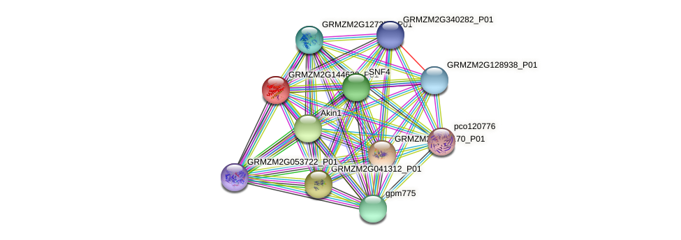 GRMZM2G144630_P01 protein (Zea mays) - STRING interaction network