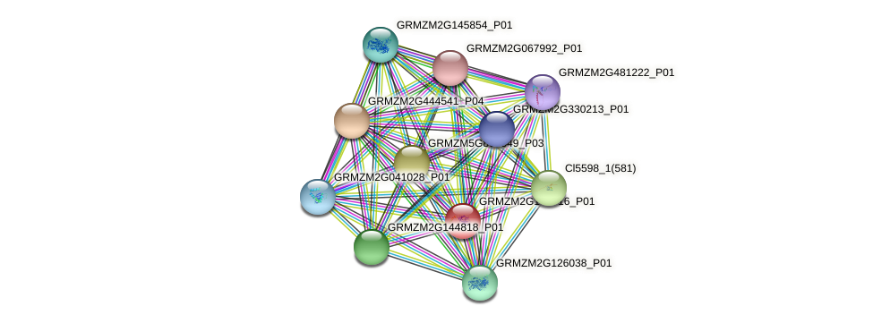GRMZM2G144716_P01 protein (Zea mays) - STRING interaction network