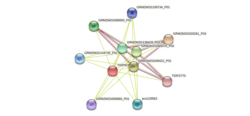TIDP9243 protein (Zea mays) - STRING interaction network