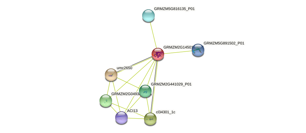 GRMZM2G145019_P01 protein (Zea mays) - STRING interaction network